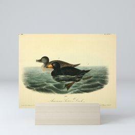 American Scoter Duck8 Mini Art Print