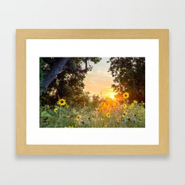 Sunflower Sunset Framed Art Print