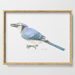 Blue Jay Study in Colored Pencils Serving Tray