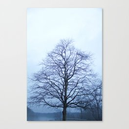 Bare Tree in a Blue Fog Canvas Print