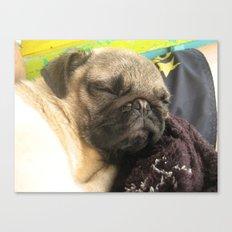 Cute Pug Sleeping - hard day at the beach Canvas Print