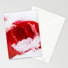 A lone rose resting in the snow after a late London snowstorm in March Stationery Cards