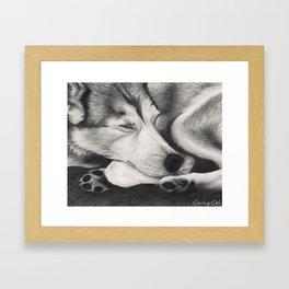 Sleeping Wolf Framed Art Print