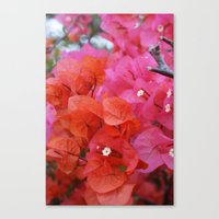 flora Canvas Prints featuring Flora by Kakel-photography