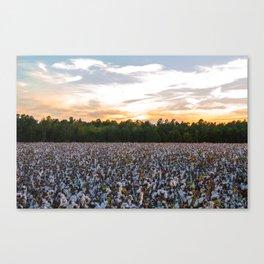 Cotton Field 11 Canvas Print