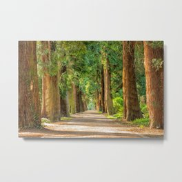 giant trees 3 Metal Print