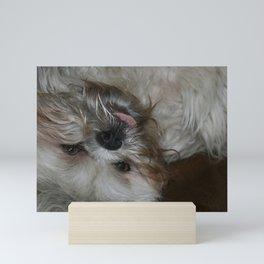Shih Tzu Puppy Dog Mini Art Print