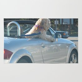 Happy dog in convertible Rug