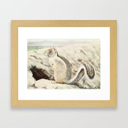 Fuertes,Louis Agassiz(1874-1927)-Burgess Animal Book forChildren 1920 (California Ground Sq Framed Art Print