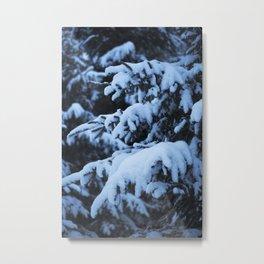 Snowy Spruce Needles 7 Metal Print