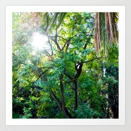 The enchanted woods | Bright tropical forest palm tree exotic green photography Art Print