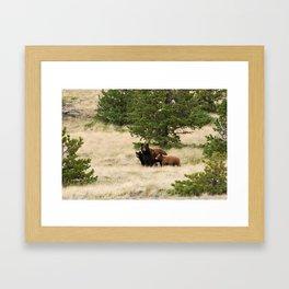 Bear with Cubs Framed Art Print
