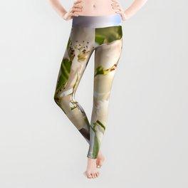 Apple blossom Leggings