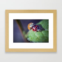 Lady Bug Love Framed Art Print