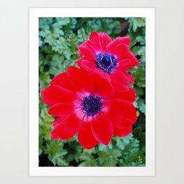 Velvet Red Poppy Anemone I Art Print