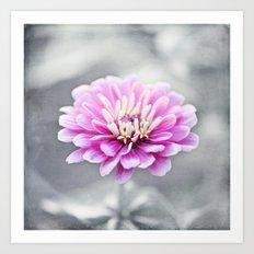 Pink Grey Flower Photography, Zinnia Floral Gray Nature Flowers Art Print