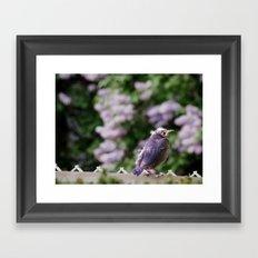 Baby Starling Framed Art Print