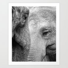 A pair of Pachyderms Art Print