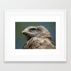 Black Kite Framed Art Print