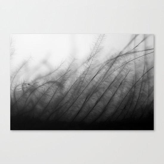 Gentle Grass Canvas Print