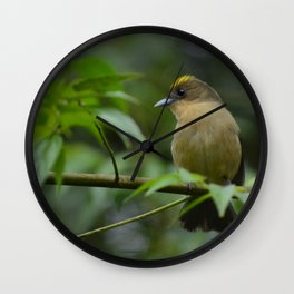 Birds from tropical forest Wall Clock