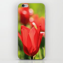 Red tulips in backlight 3 iPhone Skin