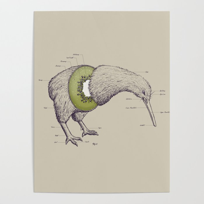 Kiwi Anatomy Poster By Willmcd Society6