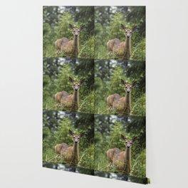 Wandering Deer Wallpaper