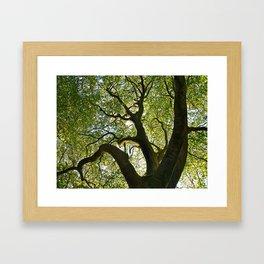 Beech Tree Canopy 2 Framed Art Print