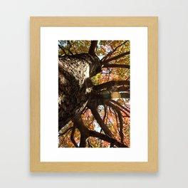 Autum Framed Art Print