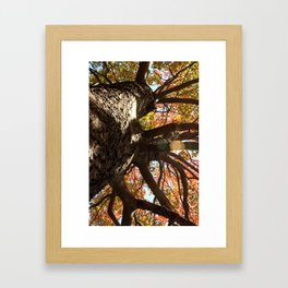 Autum Framed Art Print