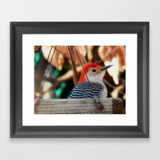 Woodpecker feeder Framed Art Print