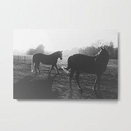 Two horses Metal Print