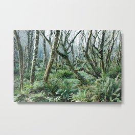 In The Forests at Cape Lookout Metal Print