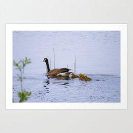 Canada Goose Art Print
