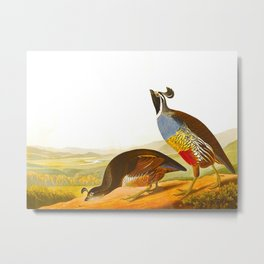 Scientific Bird Illustration Metal Print
