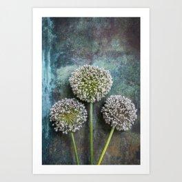 Three Allium Flowers Art Print
