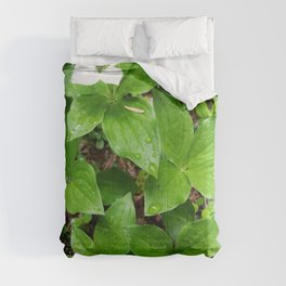 Canadian bunchberry Comforters