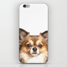 Chihuahua Portrait iPhone Skin