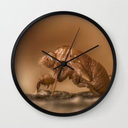 LOCUST SHELL Wall Clock
