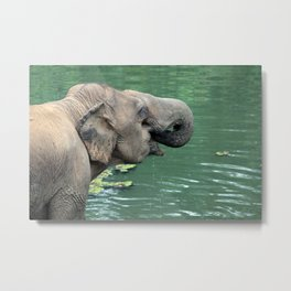 Elephant Drinking Metal Print