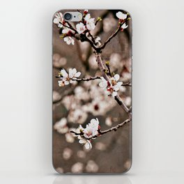 Austrian Spring: Apricot Blossoms iPhone Skin