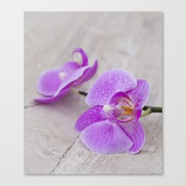 pink orchid flower close up water drops Canvas Print
