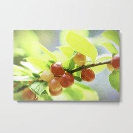 nanking cherry Metal Print