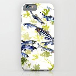 Fish Blue green fish design zebra fish, Danio aquarium Aquatic design underwater scene iPhone Case