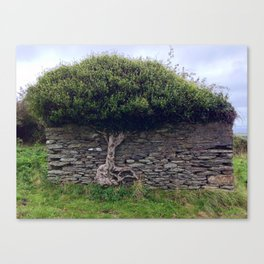 Tree in Wall Canvas Print