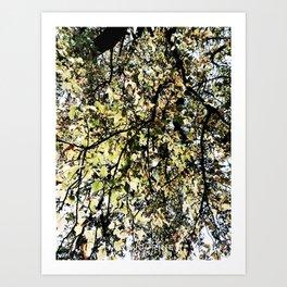 34 | Plants Photography | 200630 | Art Print