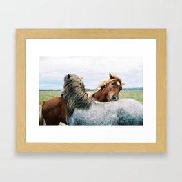 Iceland - Horse love (Leica M3 & Kodak film) Framed Art Print