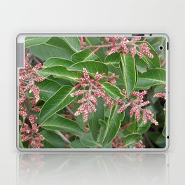 TEXTURES - Manzanita in Drought #1 Laptop & iPad Skin