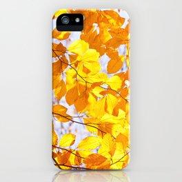 Autumn beech Fagus foliage yellow iPhone Case